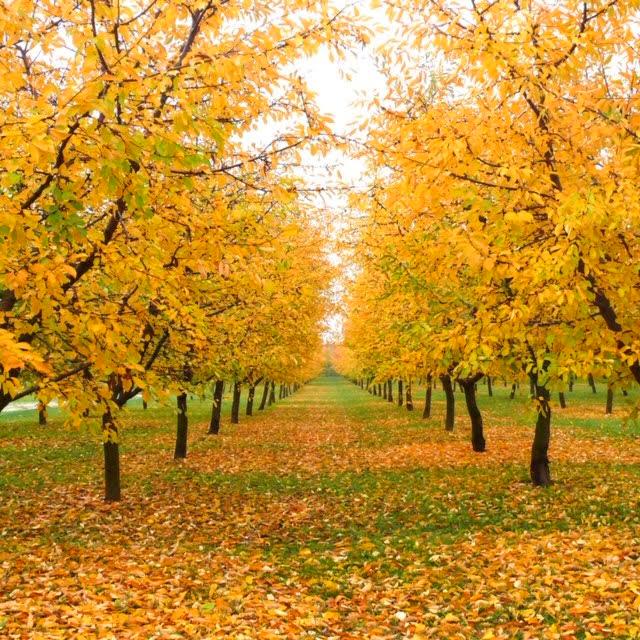 Ca' del Rio in autunno